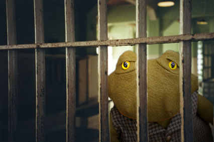 Toad in jail